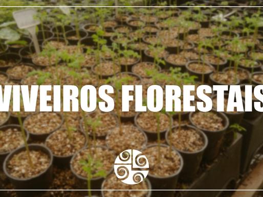 Entrevista com o professor José Carlos Arthur Júnior - Viveiros florestais