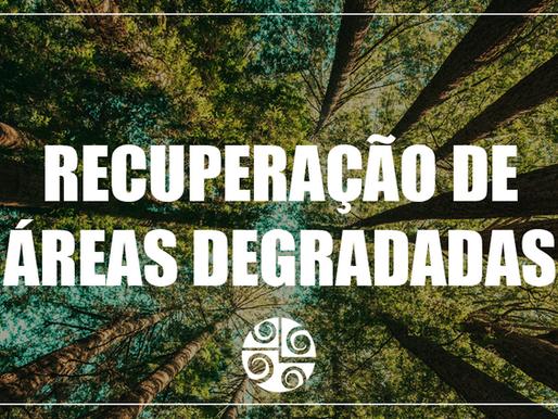 Entrevista com o Engenheiro Florestal Alexandre – Recuperação de Áreas Degradadas