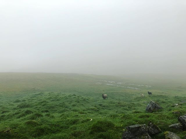 Three sheep stand in a foggy field.