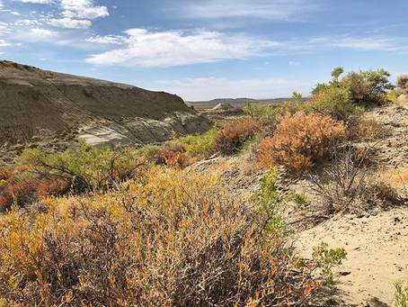 Wyoming 2019: In which we sample a paleosol mega-transect