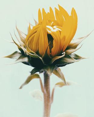 lucas-silva-pinheiro-santos-mpVzB3421lk-unsplash (1).jpg