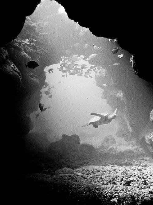 """""""Honu Caverns"""""""