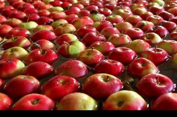 яблоко 2.png