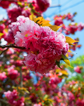 Flower Tree 2.png