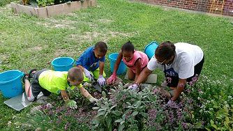 School Garden 1.jpg
