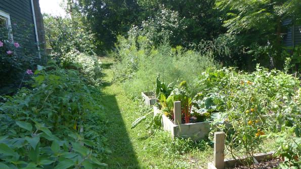 Garden in the Sun.JPG