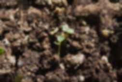 seed4.JPG