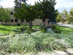Paderewski Garden