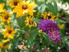 RAHAMA's Healing Garden
