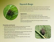 squash bug_page-0001 (1).jpg