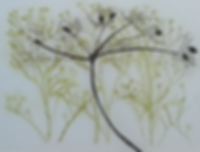Seed Heads.PNG