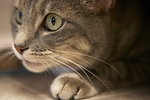 The best animal charites support No-Kill cat shelters.