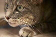 Cat Groom