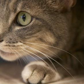 חתול חדש בבית?