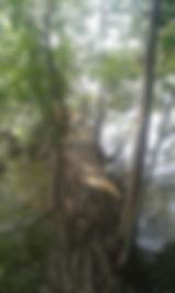 WasserBaum2.jpg