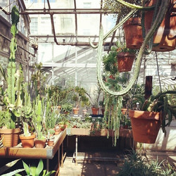 cactus arena