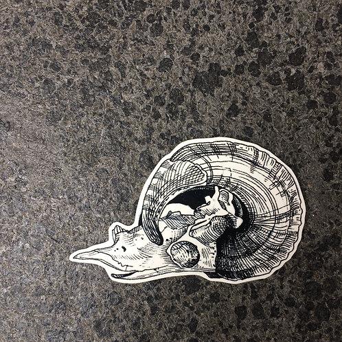 cottontatt ram bighorn sheep skull illustration temporary tattoo sticker