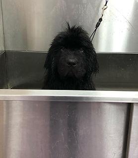 griswold  bath.jpg