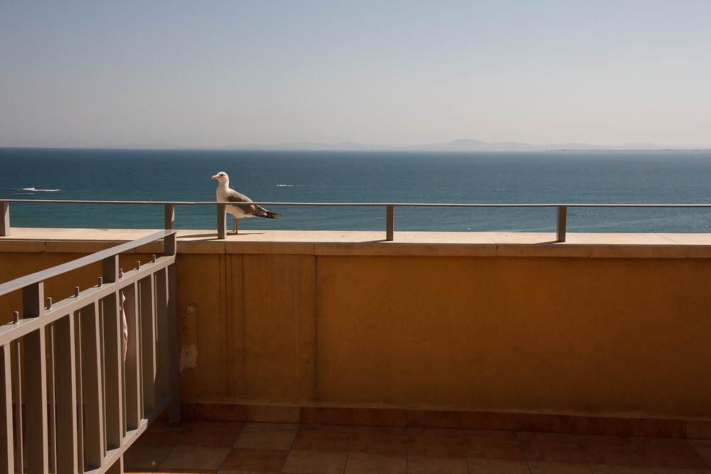 Чайка на балконе с видом на море