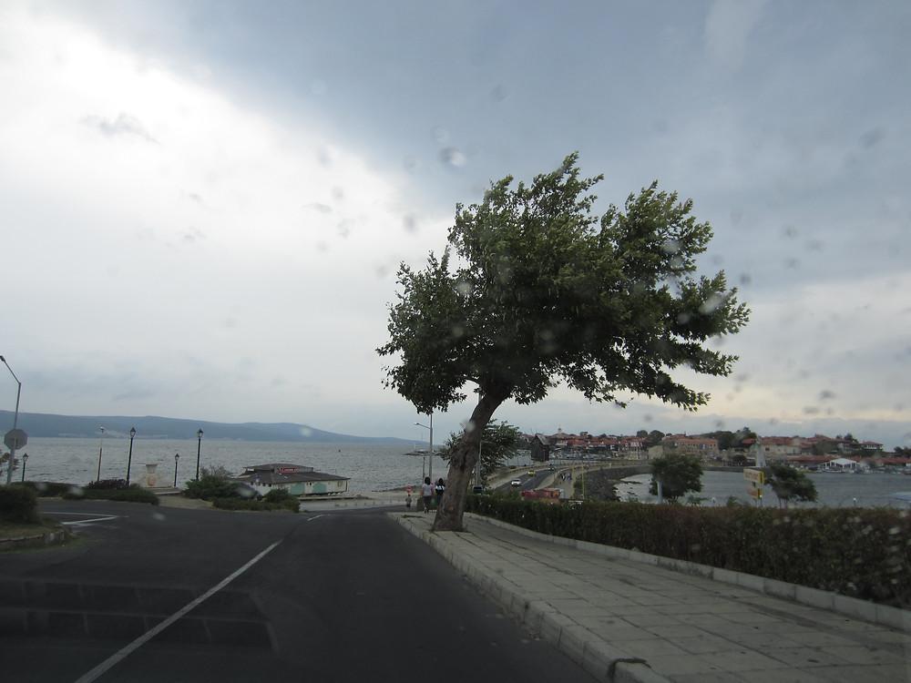дерево под силой ветров