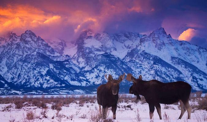 yellowstone-in-winter-yellowstone-montan