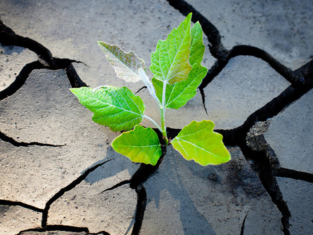 Building Resilience in Critical Times