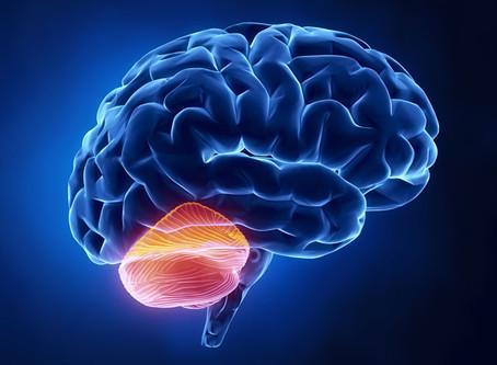Restoring Impaired Connections - the Cerebellum and Agaricus Muscarius