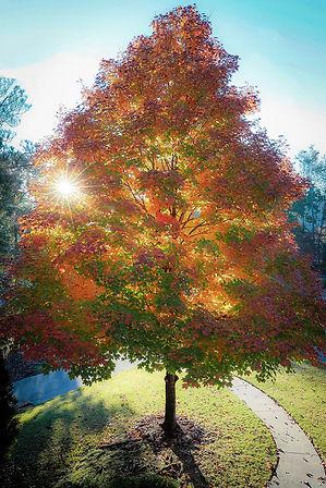 dope tree WEB.jpg