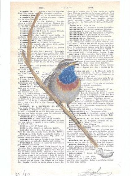 Blauwborst - kunstprint (A5)