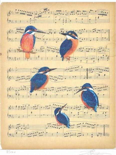 Ijsvogels - kunstprints