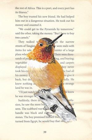 Hummingbird rufous - rosse kolibri kopie