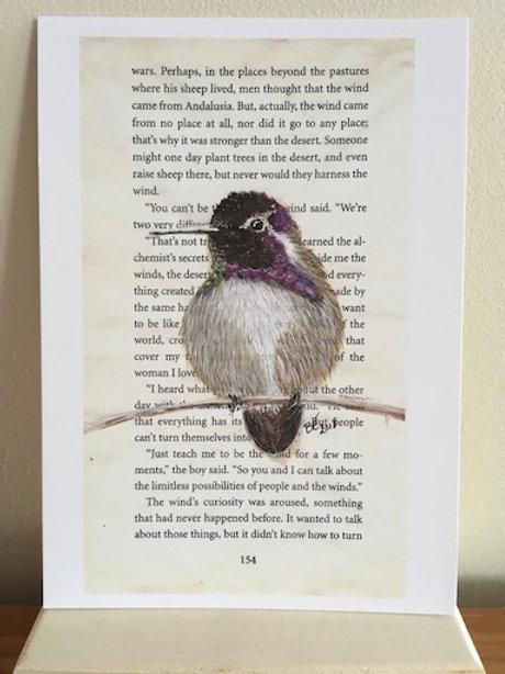 Postkaart - blanco - Costa's kolibrie