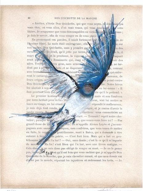 Zwaluw - kunstprint