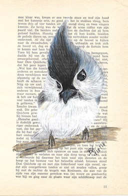 Tufted titmouse - tweekleurige mees