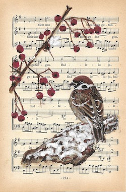 Sparrow - ringmus