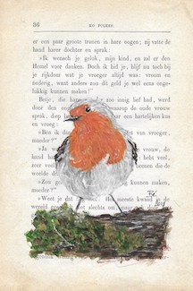 Red robin - roodborstje