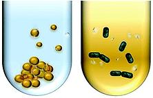 FNDs-bacteria.png