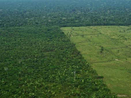 La souveraineté des États face à la question écologique : le cas du Brésil et de son Amazonie