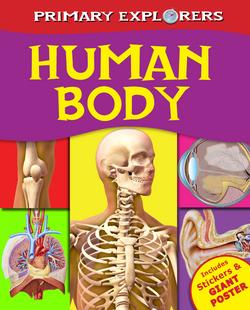 P.Ex_Human body