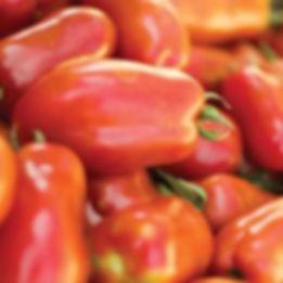 Tomato%201_edited.jpg