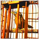 Bird1_edited.jpg