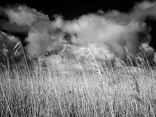 Marsh Reeds and Sky 8x6.jpg