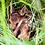 Thumbnail: 1 Fotoposter 60x90cm (Rehkitzrettung)