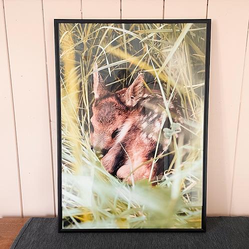 1 Fotoposter 60x90cm (Rehkitzrettung)