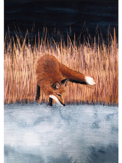 "Illustration ""Fuchs am Wasser"" (A5)"