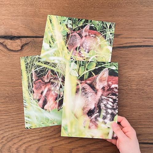 3 Postkarten A5 (Rehkitzrettung)