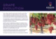 gE brochure.PNG