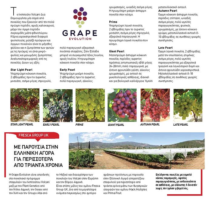 Grape Evolution Greek article.png
