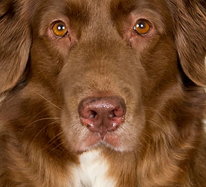 Nose work | dog training | dog trainer