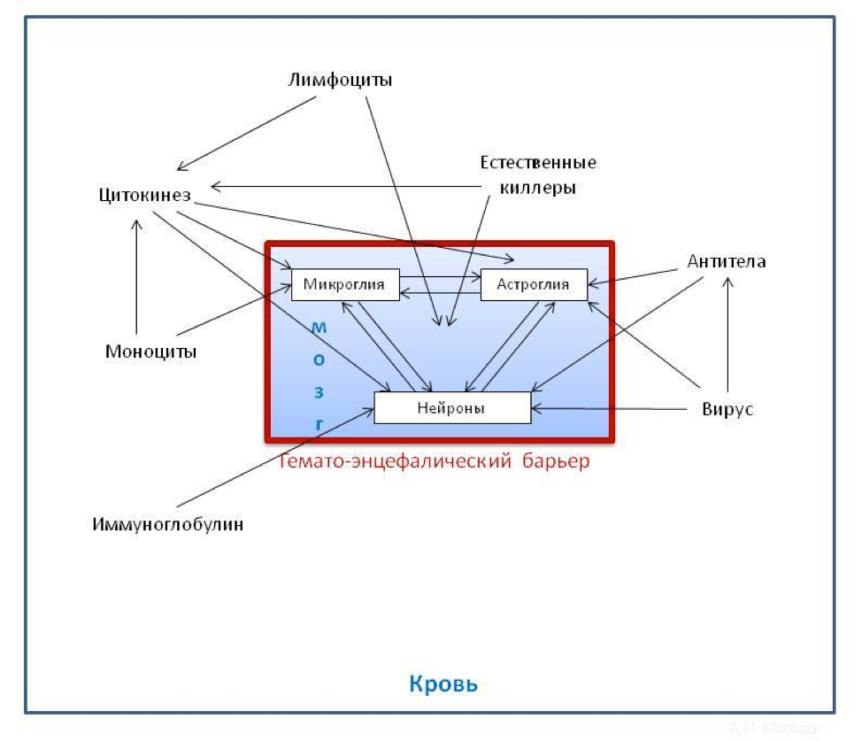 Психоиммунология шизофрении